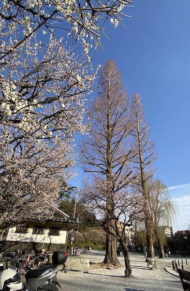 赤塚溜池公園3.jpeg